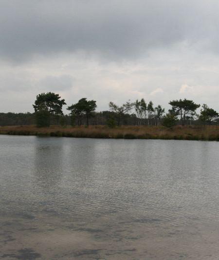 Uitstap ecologie Kalmthoutse Heide